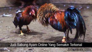 Judi Sabung Ayam Online Yang Semakin Terkenal
